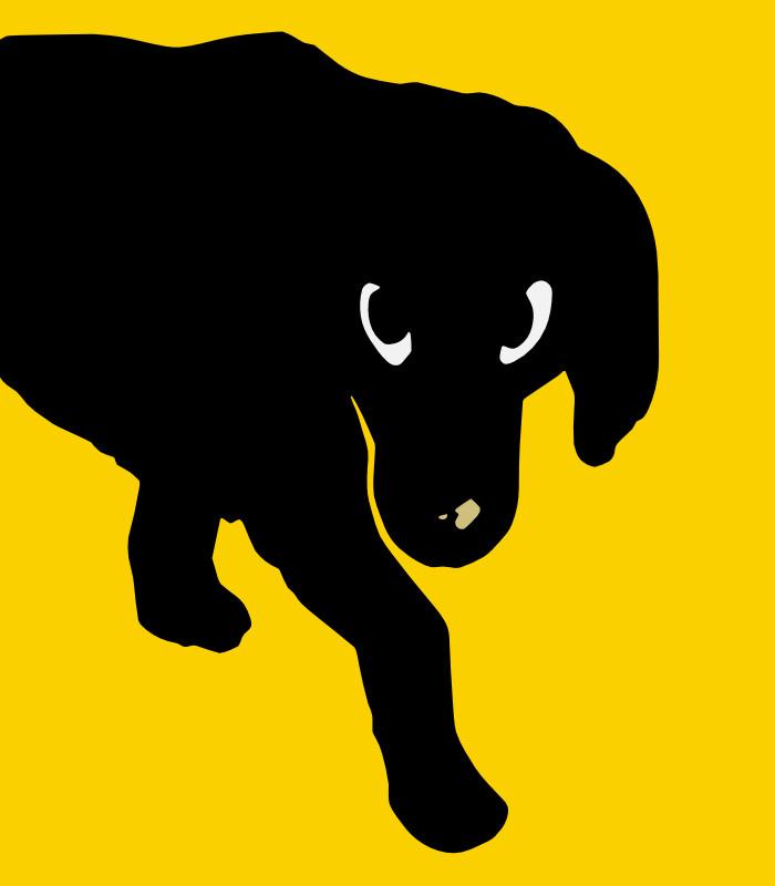 Birnie the Dog